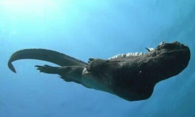 Mini Godzilla fotografiado en la Isla Galápagos se viralizó en redes